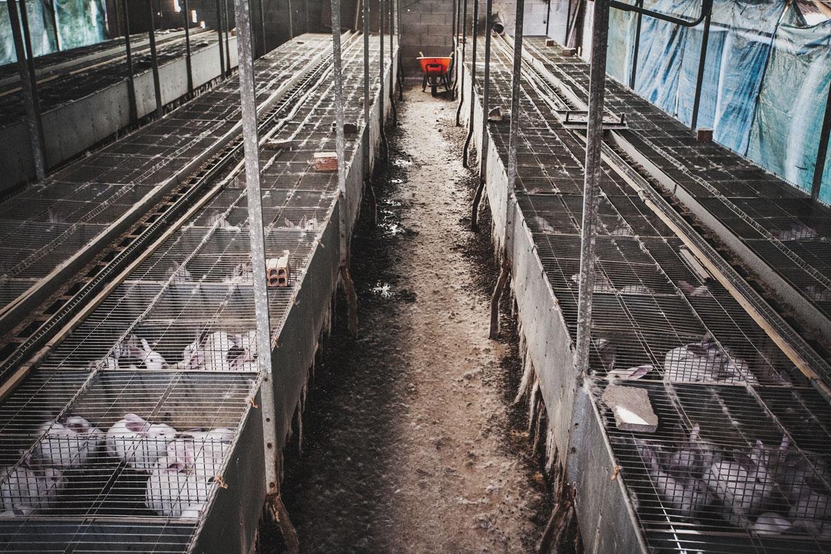 vista general granja de conejos