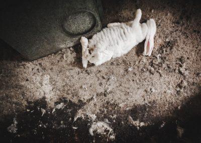 granja conejos011 ACreus