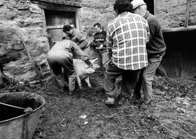 matanza del cerdo 002_ariadna creus
