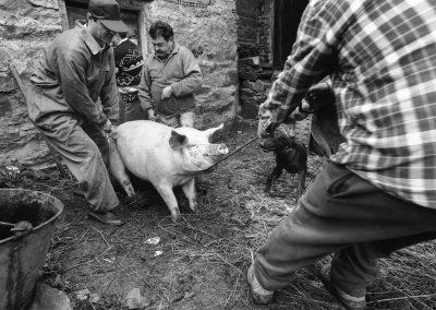 matanza del cerdo 003_ariadna creus