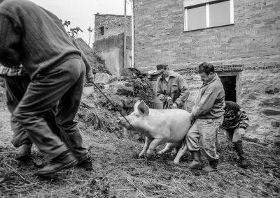 matanza del cerdo 008_ariadna creus