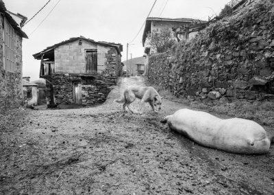 matanza del cerdo 014_ariadna creus