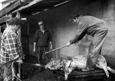 matanza del cerdo 020_ariadna creus
